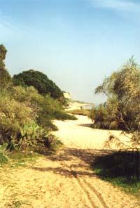 Unverbauter Klippen-Strand von der OÁSIS - VERDE in Cabanas de Tavira nur 500 Meter entfernt, hier entlang geht es bis nach Cacela Fábrica ca. 6 Km so weiter