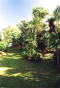 Blick von der Quintal-Terasse quer durch den Garten Richtung Osten