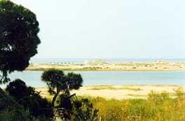 Pinienbaum Hain am Fort von Cabanas de Tavira