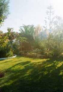 Alle Häuser sind umgeben vom tropischen Park