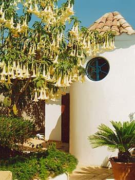Das Badezimmer vom Ferienhaus Casa da Oliveira von aussen... umgeben von über 40 unterschiedlichen Pflanzenarten... die OÁSIS - VERDE verfügt über mehr als 250 unterschiedliche Pflanzenarten...
