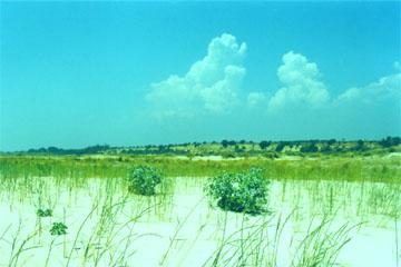Herrlicher Ausblick von der Strand-Insel auf die, Landseitig zur Lagune hin verlaufenden, bis zu 30 m hohen, Sandsteinfelsen östlich der OÁSIS - VERDE